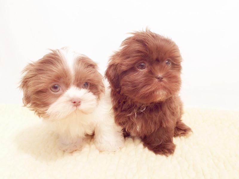 Empire Puppies
